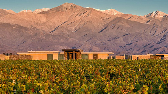 the-vines-mendoza-4.jpg